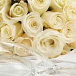 champagne_white_roses_hd